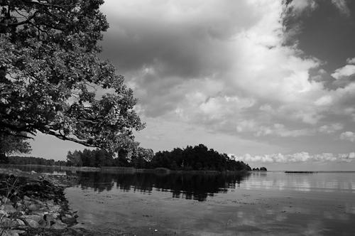 Schweden - erste Eindrücke Uferbewuchs